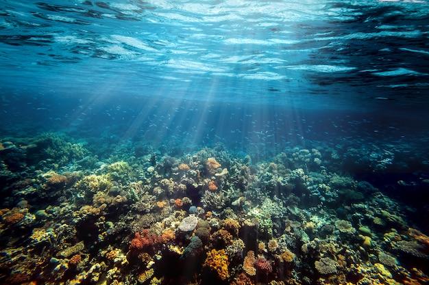 Podwodna rafa koralowa na morzu czerwonym