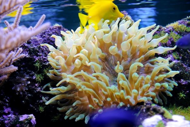 Podwodna scena przedstawiająca różne kolorowe ryby pływające