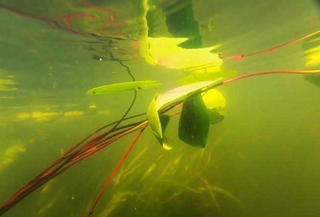 Podwodna scena w letniej rzece