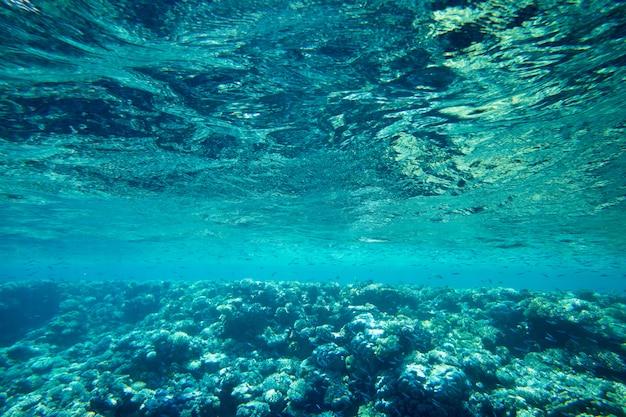 Podwodna scena z kopii przestrzenią
