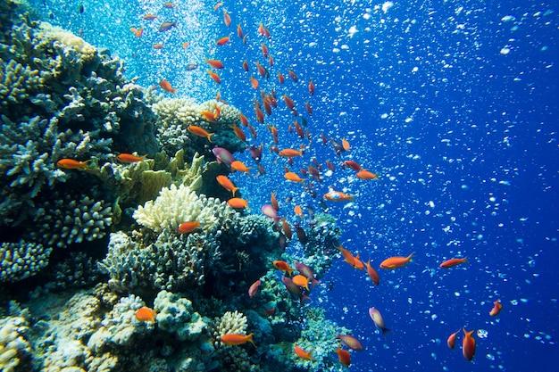 Podwodna scena z miejsca na kopię