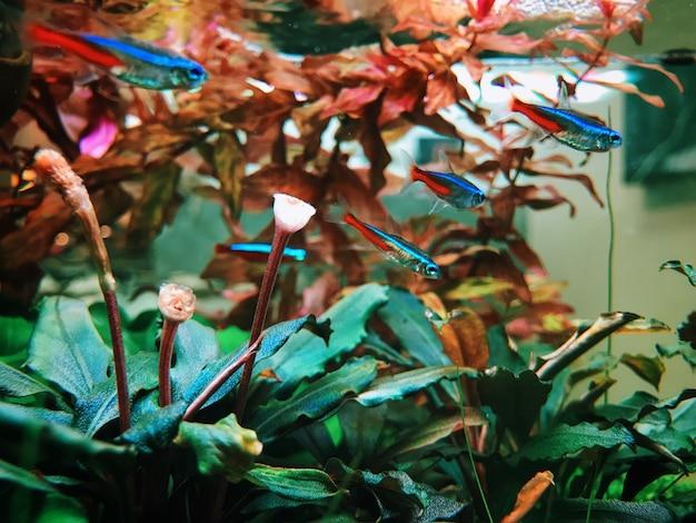 Podwodne kwiaty i rośliny akwariowe