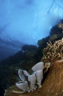 Podwodny krajobraz morze