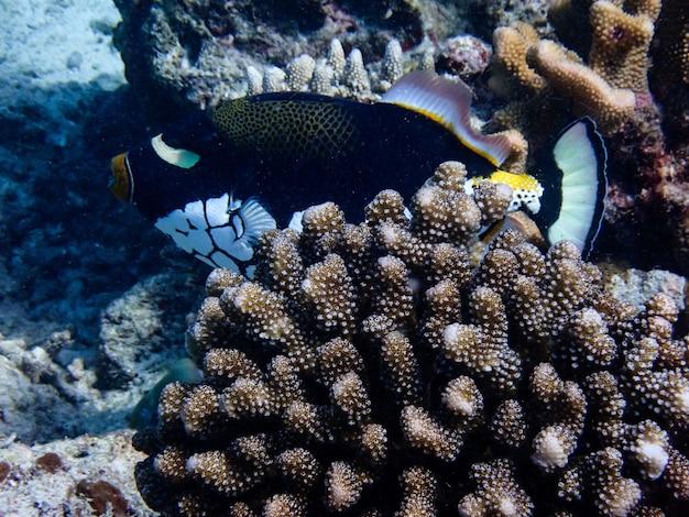 Podwodny krajobraz z morskim życiem.