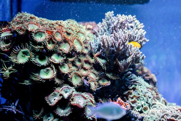 Podwodny obraz roślin morskich i glonów w morzu
