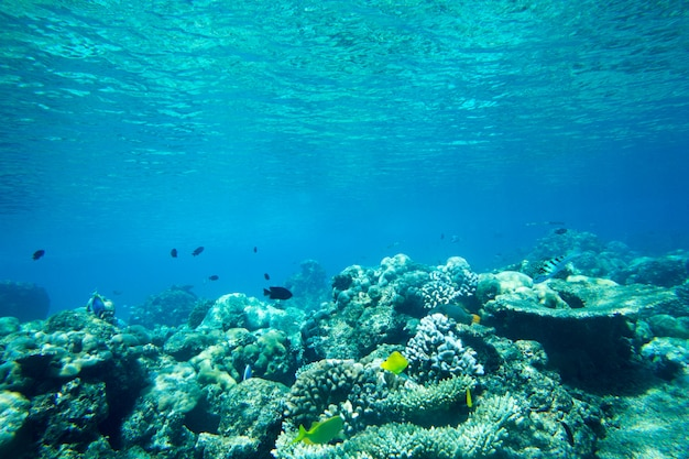 Podwodny świat krajobraz