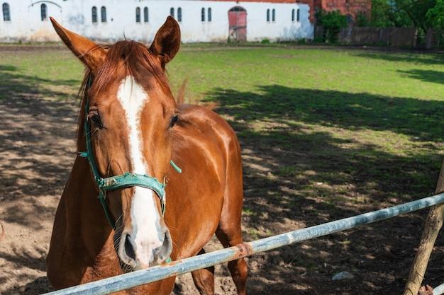 Podwórko dla koni we wsi rudy koń w stajni z jeźdźcem w zbliżeniu