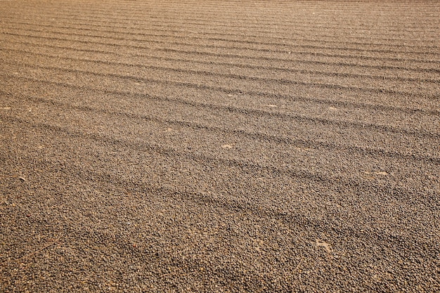 Podwórko surowej kawy. kawa zebrana na ziemi.