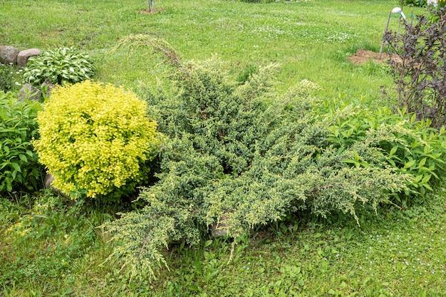 Podwórko z grupą krzewów i roślin jałowiec, tuja, berberys przed domem