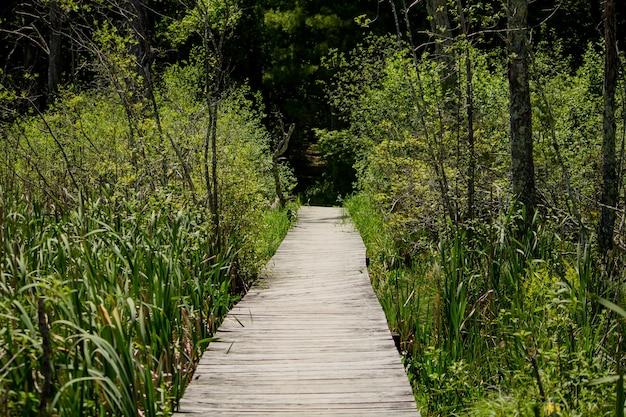 Podwyższona drewniana ścieżka prowadząca przez wysokie rośliny w lesie