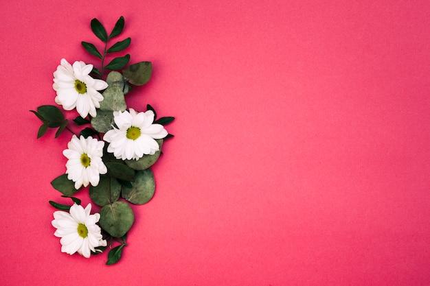 Podwyższony widok biali kwiaty i liść dekorujący na czerwonym tle