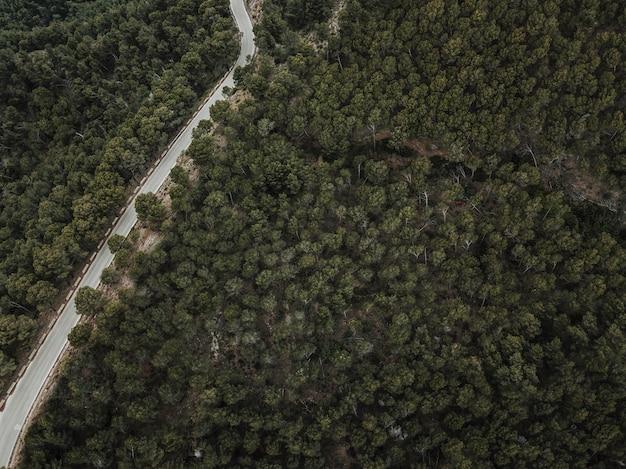 Podwyższony widok drogi i zielonych drzew iglastych