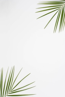 Podwyższony widok palmowi liście przy kątem biały tło