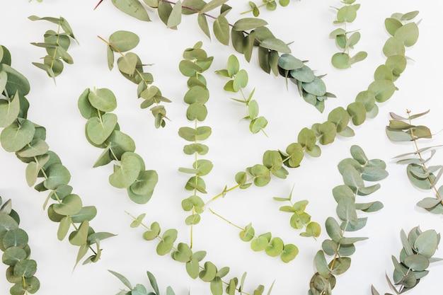 Podwyższony widok zielone gałązki rozprzestrzeniać nad białym tłem