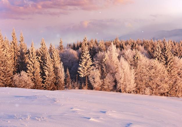 Pogodna ranek scena w halnym lesie. jasny zimowy krajobraz w śnieżnym lesie