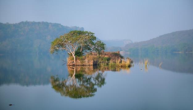 Pogodny poranek nad jeziorem padma talao ranthambore park narodowy radżastan indie