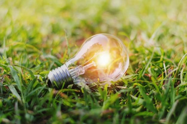 Pojęcia eco żarówka na zielonej trawie z światłem słonecznym