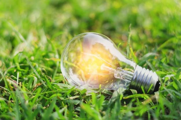 Pojęcie eco żarówka na zielonej trawie z pomysłu oszczędzania władzy energią