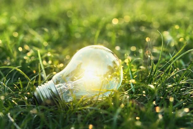 Pojęcie ekologiczne. żarówka na zielonej trawie z tłem słońca i bokeh