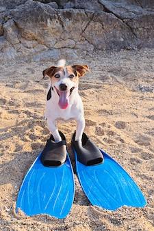 Pojęcie zabawy rozrywka z psem w lecie