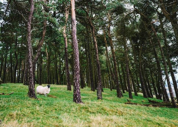 Pojedyncza śliczna statek pozycja na zielonym wzgórzu z wysokimi drzewami