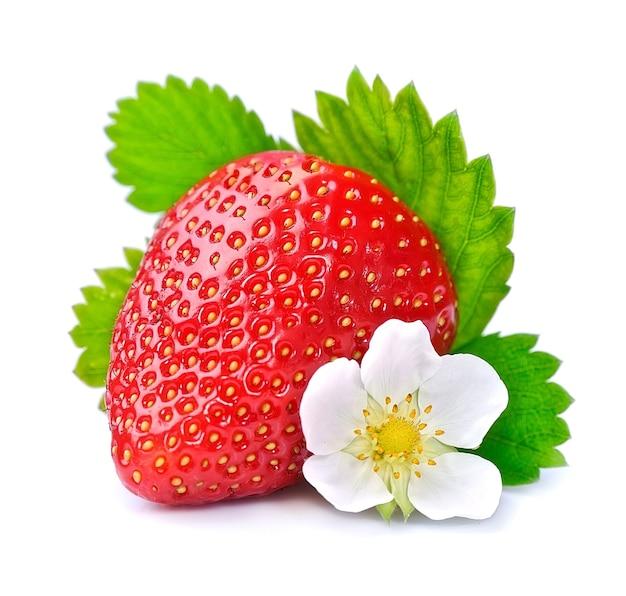 Pojedyncza truskawka z białymi kwiatami na białym tle