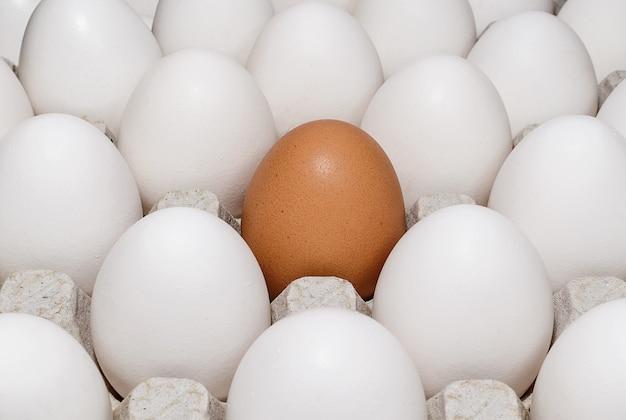 Pojedyncze brązowe jajko wśród białych jaj z bliska