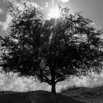 Pojedyncze drzewo na tle błękitnego nieba z chmurami i światłem słonecznym