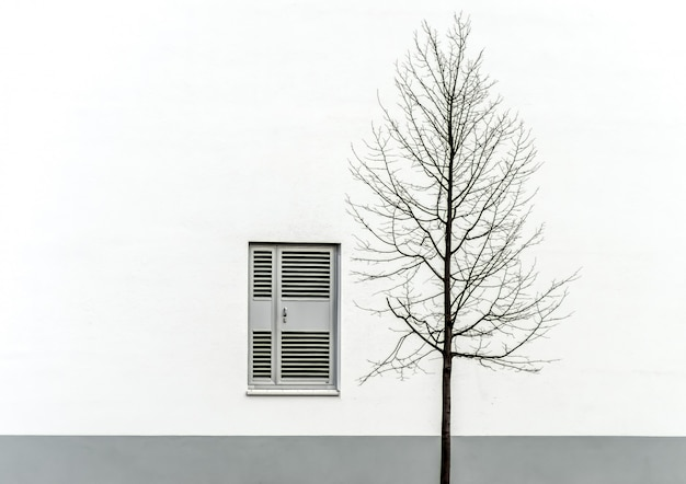 Pojedyncze gołe drzewo przed biało-szarą ścianą z oknem