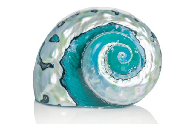 Pojedyncze niebieskie muszle morskie na białym tle w tle