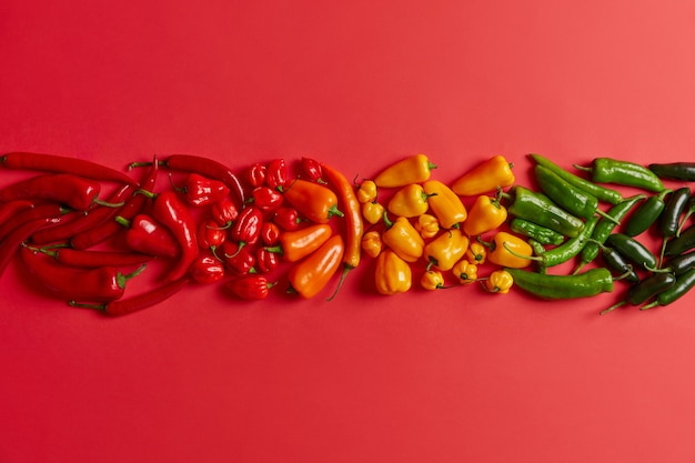 Pojedyncze ujęcie czerwony, żółty, zielony, papryka chili ułożone w jednym rzędzie na jasnym czerwonym tle. różnorodność pikantnych, zdrowych warzyw do przygotowania smacznych gorących dań lub przypraw. kreatywna kompozycja.