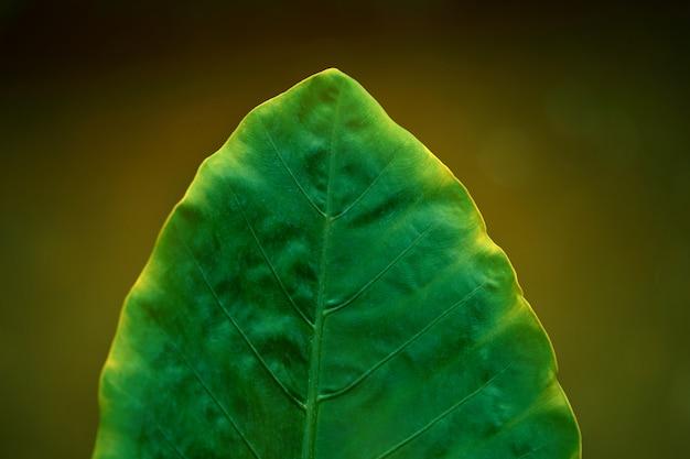 Pojedyncze zielone liście ze światłem słonecznym na krawędzi