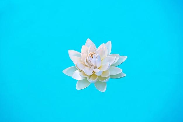 Pojedynczy biały kwiat lilii wodnej