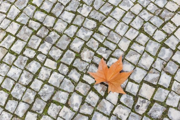Pojedynczy jesienny liść klonu leżący na kamiennym bruku.