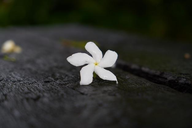 Pojedynczy kwiat natura malezja orchidei