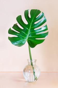 Pojedynczy liść rośliny monstera w wazonie na różowo