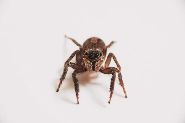 Pojedynczy pająk na białym tle na białym tle