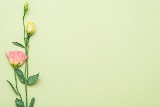 Pojedynczy różowy kwiat eustoma. skopiuj miejsce na zielonym tle. leżał na płasko.