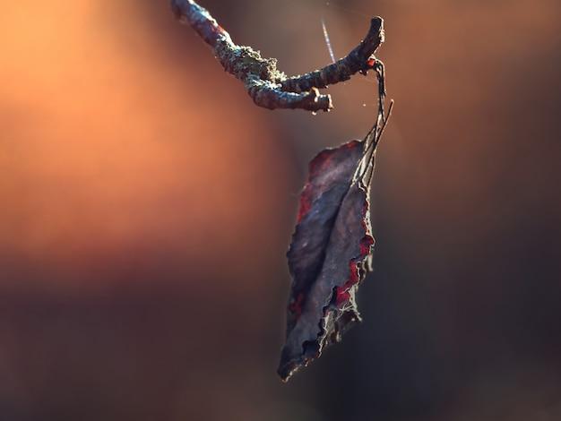 Pojedynczy suchy jesienny liść na gałęzi