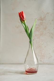 Pojedynczy tulipan w karafce