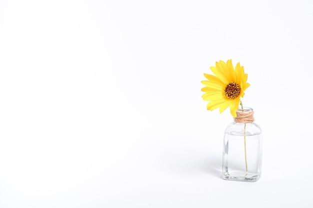 Pojedynczy żółty kwiat stokrotki w szklanym słoju z wodą vintage