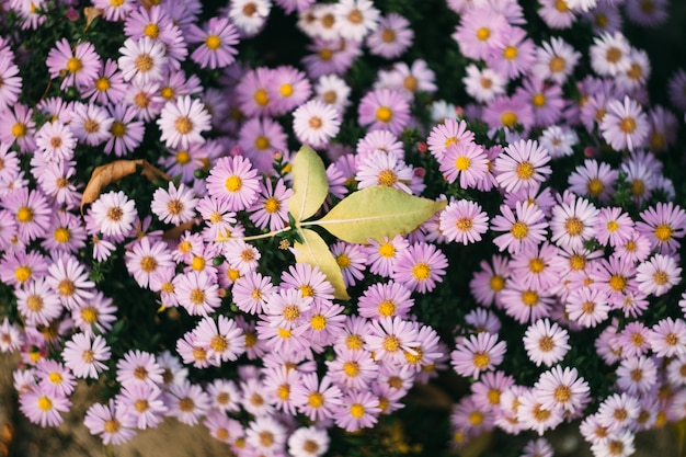 Pojedynczy żółty liść na różowych kwiatach