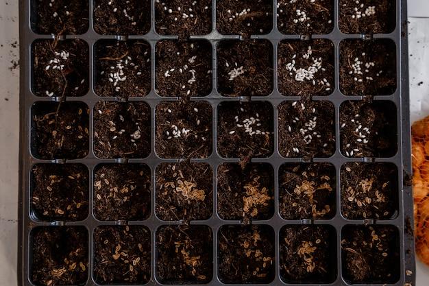 Pojemnik na sadzonki z widokiem z góry na tabletki osierocone. nasiona w polu kiełkowania. dom i ogród.