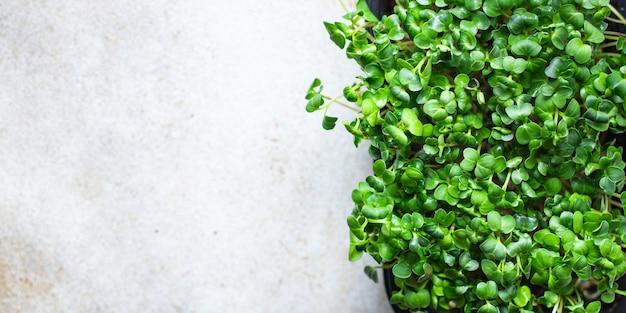 Pojemnik z mikrogreenami sałatka wegetariańska surowa jedzenie zioła musztarda bazylia świeża rzodkiew wegańska