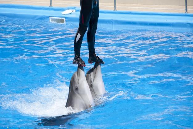 Pokaz delfinarium. trener na dwóch delfinach