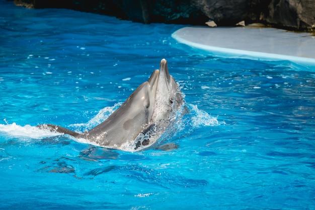 Pokaz delfinów w tajlandii