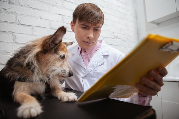 Pokazuje mu uroczy pies rasy mieszanej patrząc na schowka lekarz weterynarii