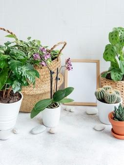 Pokój wypełniony wieloma nowoczesnymi roślinami, przydomowy ogródek z makietą w ramie plakatowej