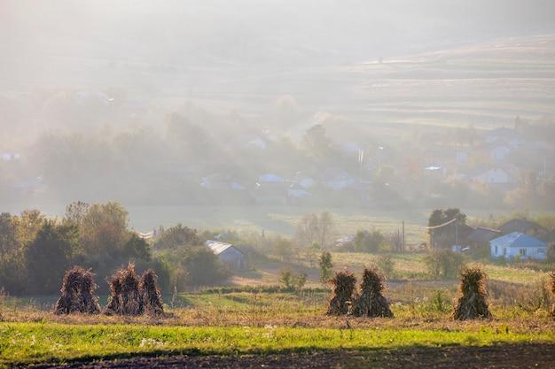 Pokojowy mglisty krajobraz, wiejska jesień panorama. sucha kukurydza łodygi złote snopy na pustym trawiastym polu po zbiorach, domy chłopskie wśród zielonych sadów na mglistych wzgórzach