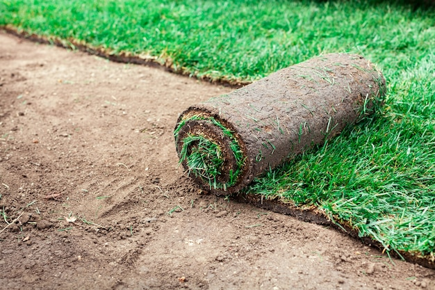 Pokrycie gleby z zielonymi rolkami trawnika